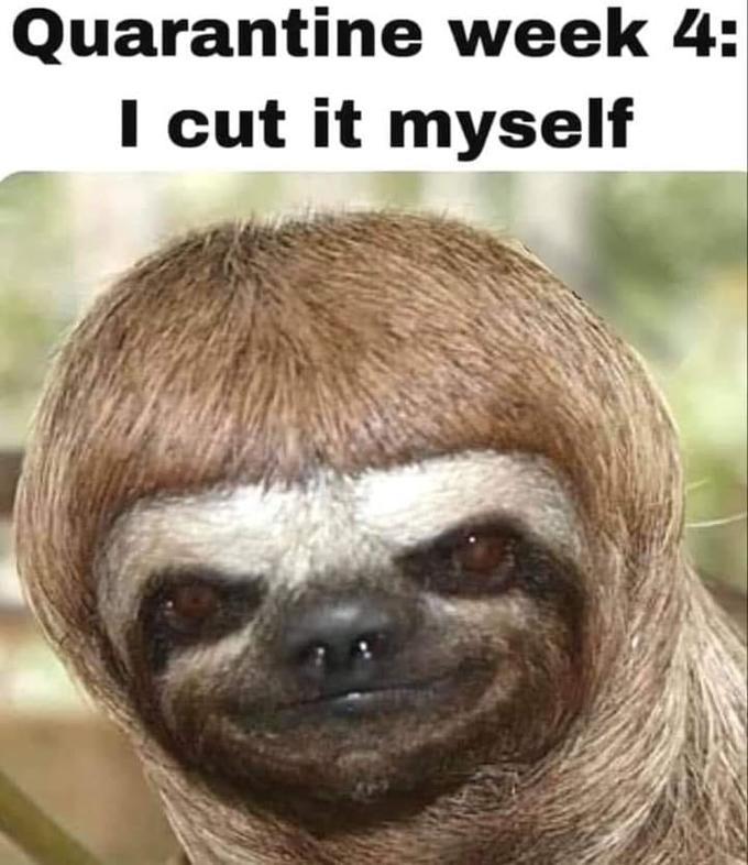 Quarantine haircut - Week 4. | /r/CoronavirusMemes | 2019-20 ...