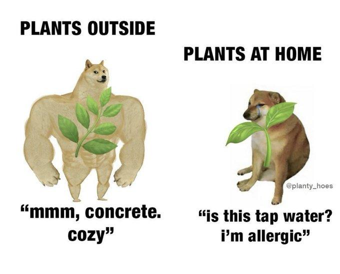 """PLANTS OUTSIDE PLANTS AT HOME @planty_hoes """"mmm, concrete. cozy"""" """"is this tap water? i'm allergic"""" Wildlife Adaptation Organism"""