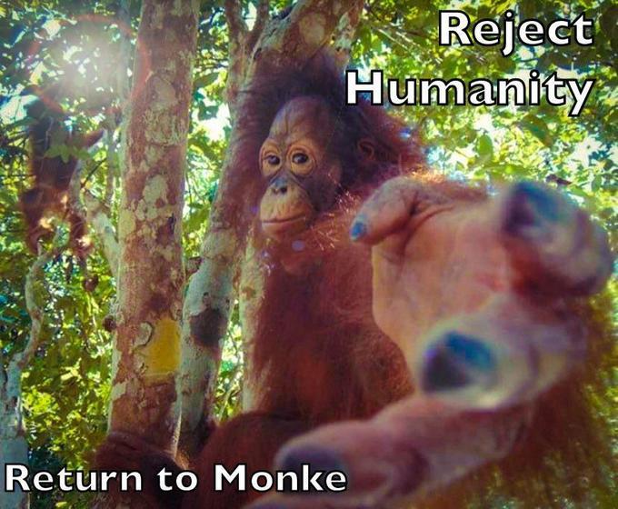 Reject Humanity Return to Monke Orangutan Primate Organism Adaptation Friendship Wildlife