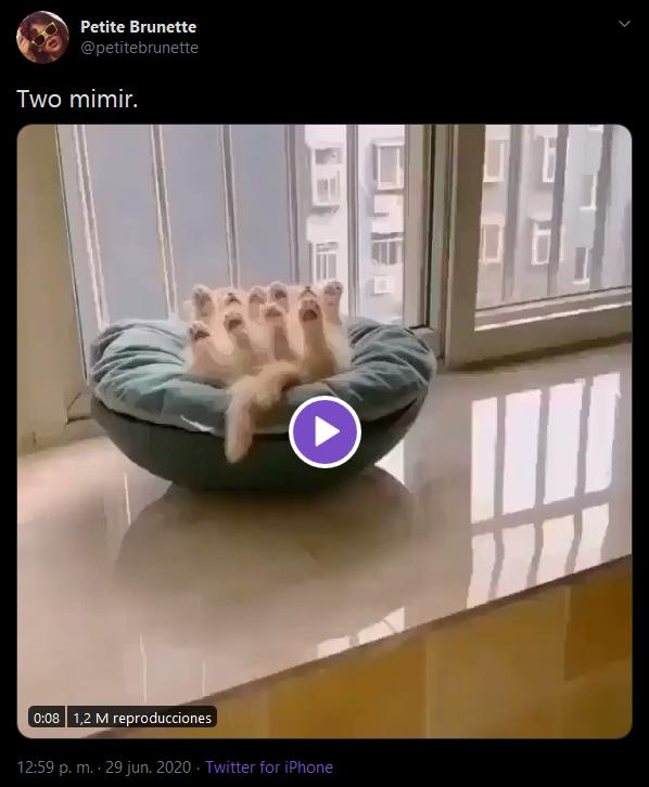 Petite Brunette @petitebrunette Two mimir. 0:08 1,2 M reproducciones 12:59 p. m. · 29 jun. 2020 · Twitter for iPhone Cat Kitten Leg Arm Hand