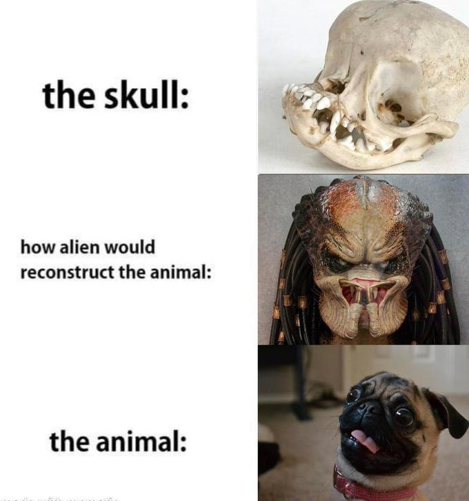 the skull: how alien would reconstruct the animal: the animal: Canidae