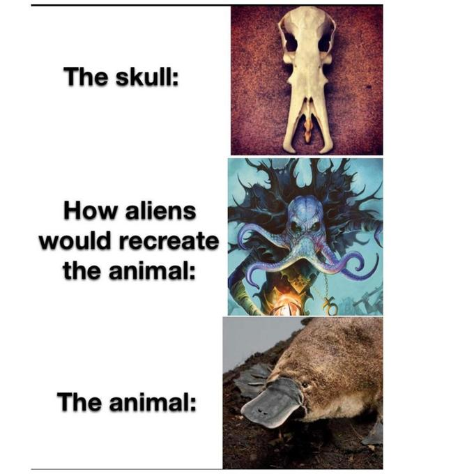 The skull: How aliens would recreate the animal: The animal: Organism Adaptation Human