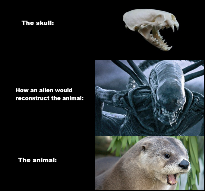 The skull: How an alien would reconstruct the animal: The animal: Organism Adaptation Snout Wildlife