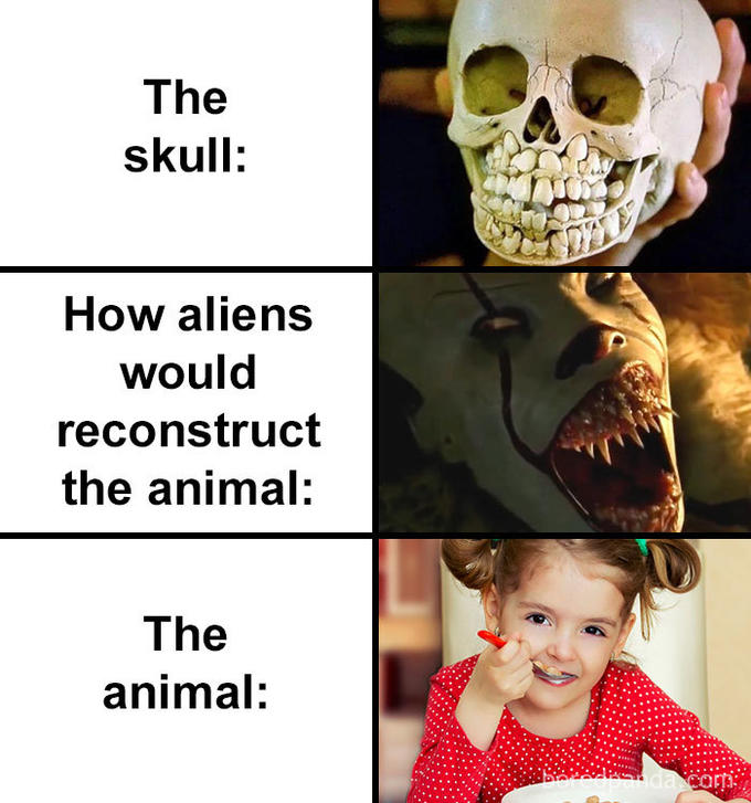 The skull: How aliens would reconstruct the animal: The animal: Head Jaw Human
