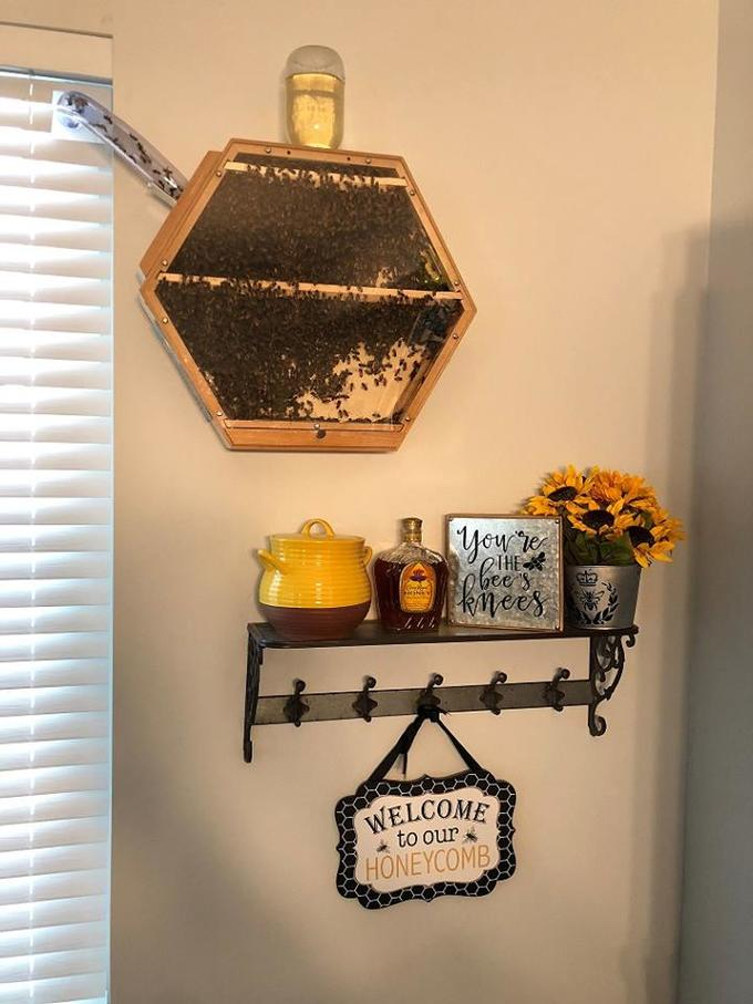 You re QIHE obee kimees ONE WELCOME to our HONEYCOMB Bees Wall Orange Still life photography Interior design Artifact