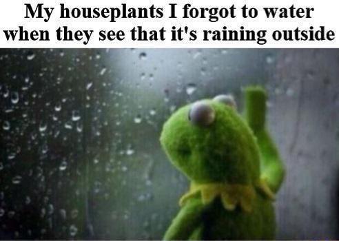 Plant Killer Meme