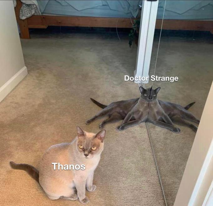 Doctor Strange Thanos Vertebrate Cat Mammal Felidae Floor Carnivore Fawn Wood Small to medium-sized cats Flooring Whiskers