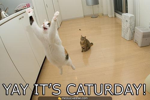 Pet Of The Week Caturday Bob Fm Cayman