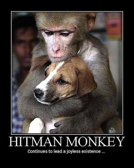 Image 27900 Hitman Monkey Know Your Meme