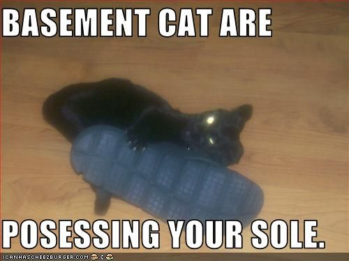 BASEMENT CAT ARE POSESSING YOUR SOLE C A N H AS CHEEZBURGER. COM u0027$ $ & Image - 101471]   Basement Cat   Know Your Meme