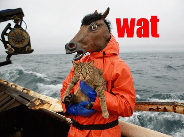 Znalezione obrazy dla zapytania wat meme horse