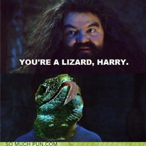image 224209 you re a wizard harry know your meme