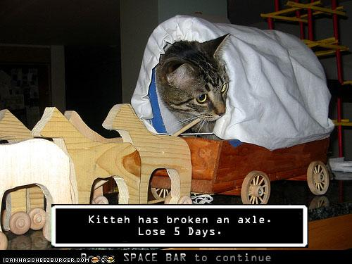 kitten has broken an axle lose 5 days the oregon trail know
