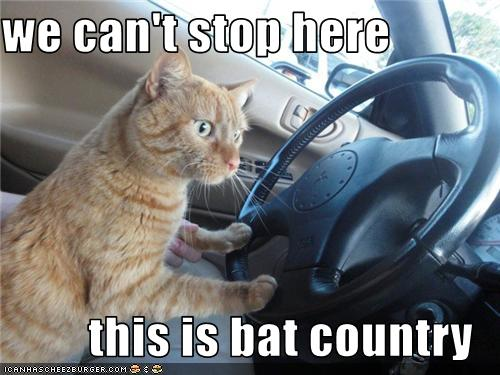 We can t stop here this is bat country cat