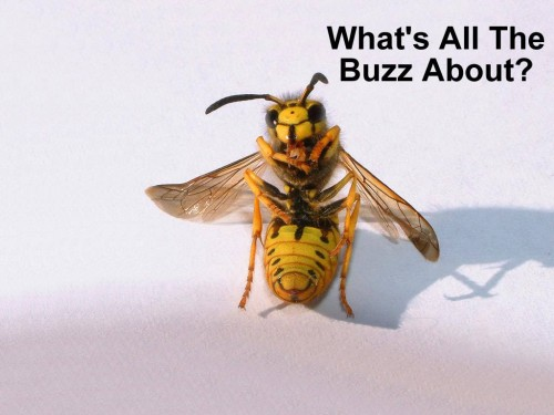 BZZZ | Bees | Know Your Meme