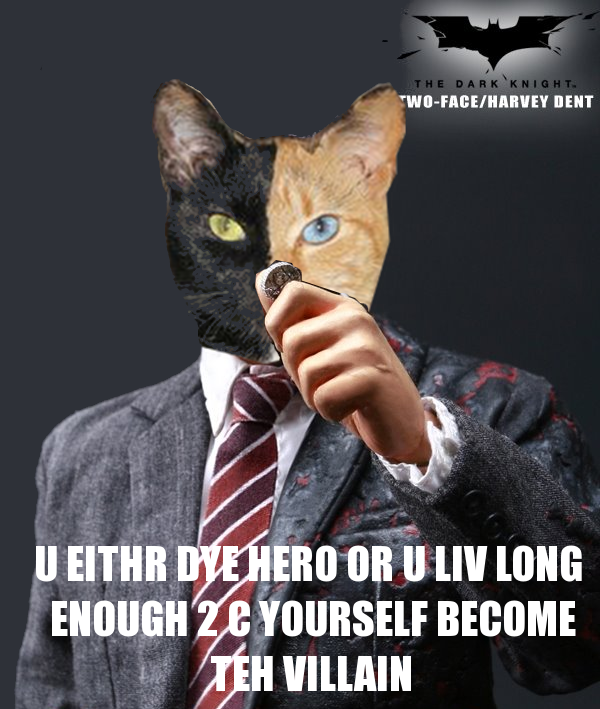 Harvey Dent Cat Venus The Two Faced Cat Know Your Meme