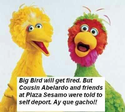Sesame Street Vs Plaza Sesamo With Mitt Fired Big Bird