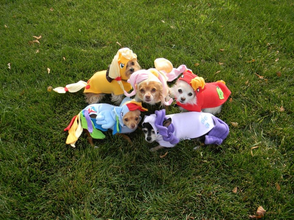 Twilight Sparkle Rainbow Dash Pony Dog Spike Applejack Princess Luna Vertebrate Grass Toy Plant Lawn Play