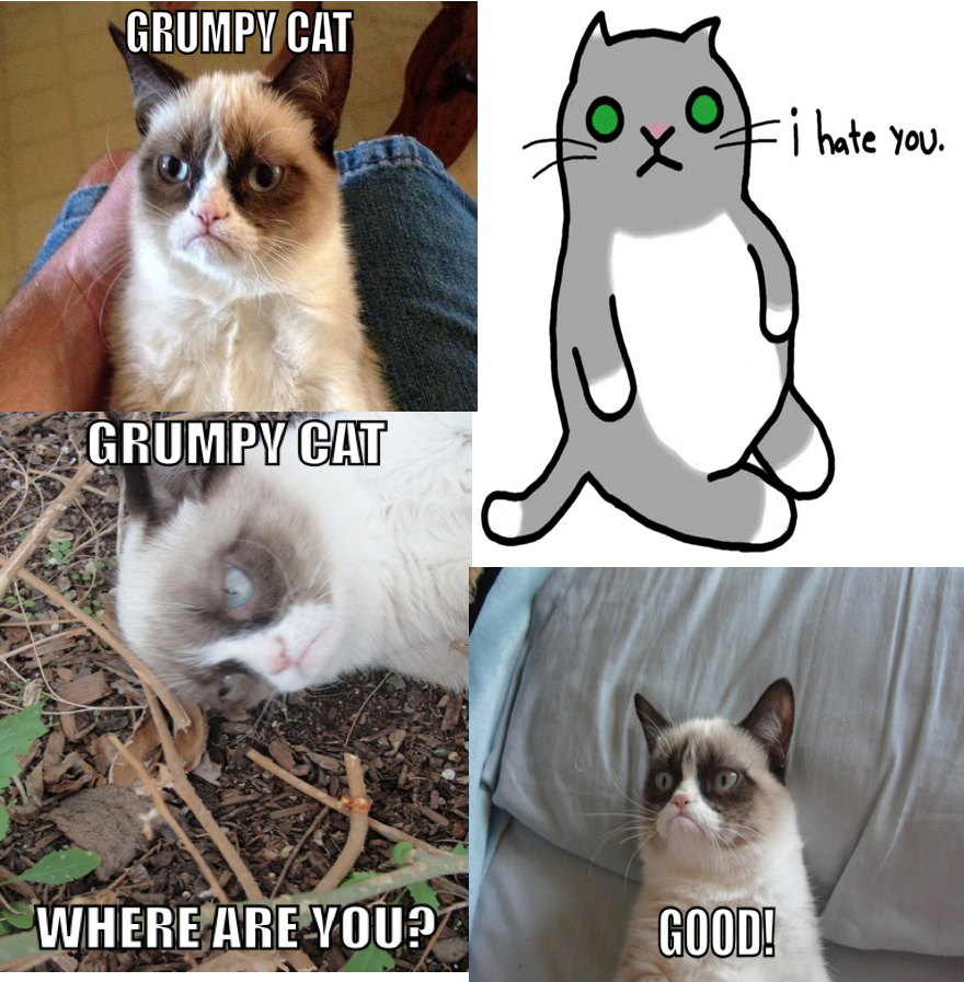Grumpv cat i hate you cat where are you good