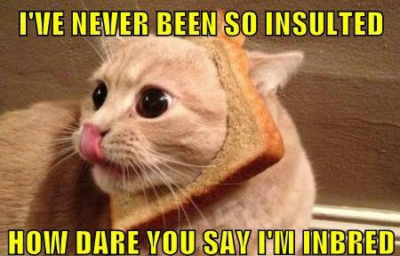 Image - 476940] | Cat Breading | Know Your Meme
