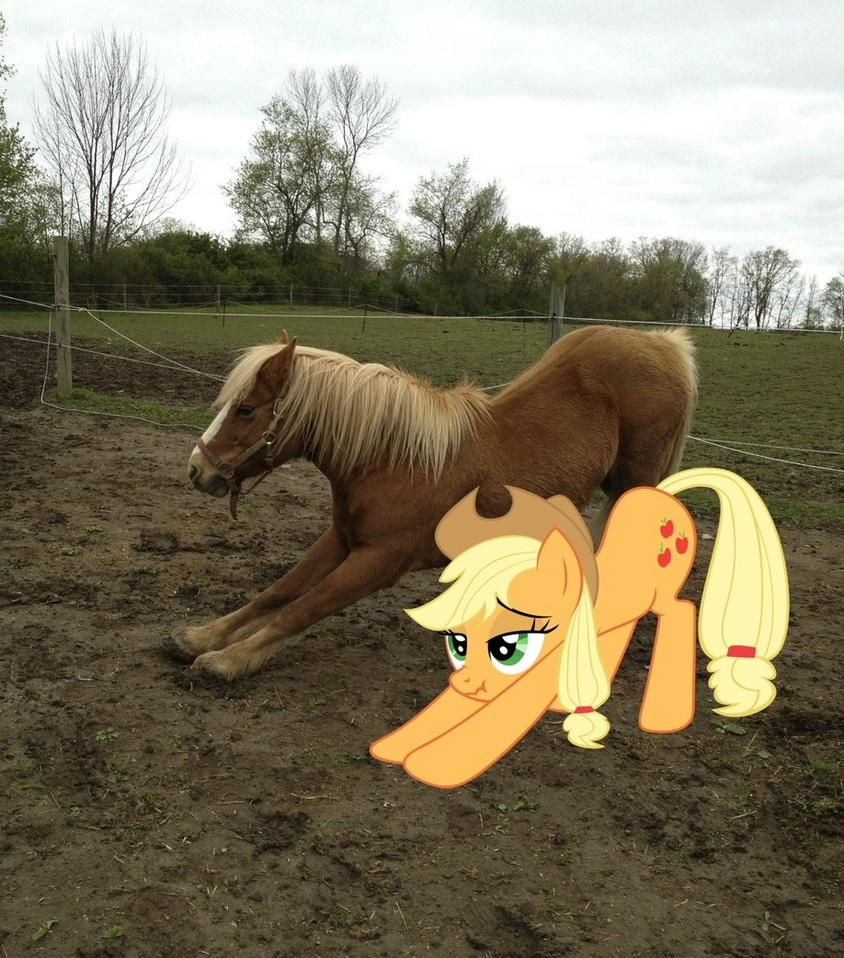 image 503665 my little pony friendship is magic know your meme