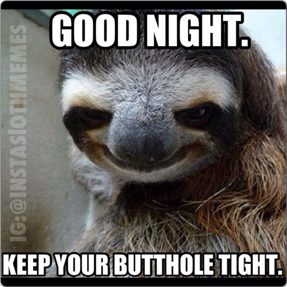 sloth nighty night sloths know your meme
