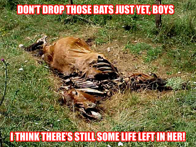 Image result for funny meme herd of dead horses