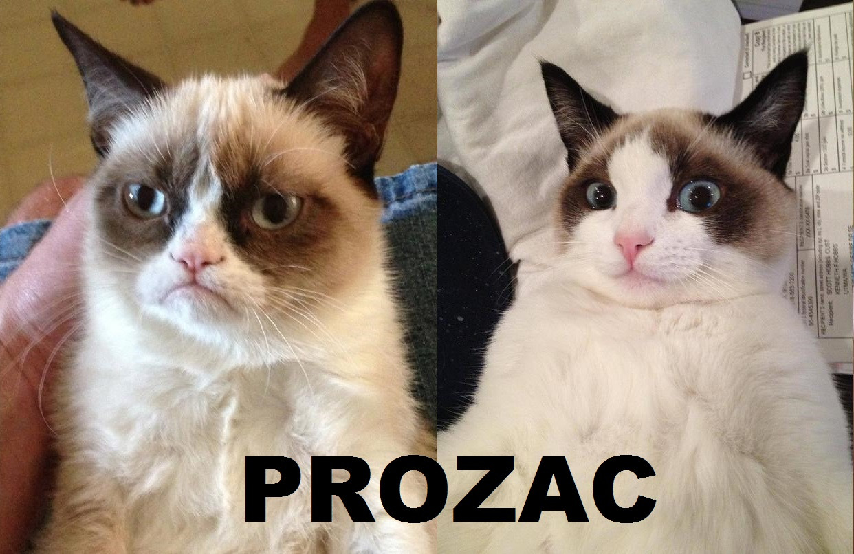 PROZAC Cat Small To Medium Sized Cats Like Mammal Photo Caption Fauna Whiskers Ragdoll