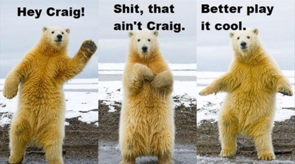 Socially Awesome Polar Bear Animals Know Your Meme