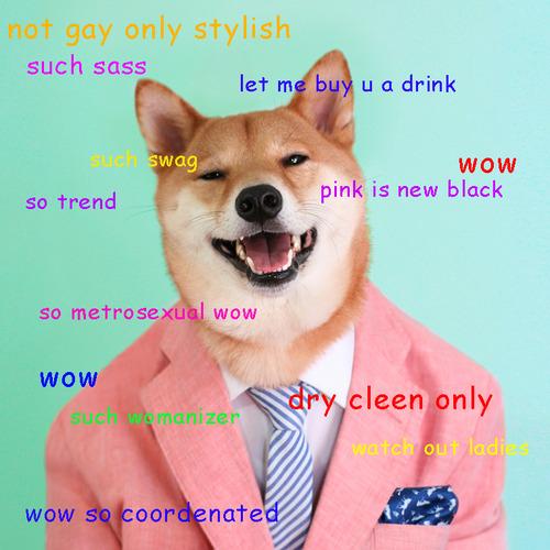 dress - Meme dog stylish video
