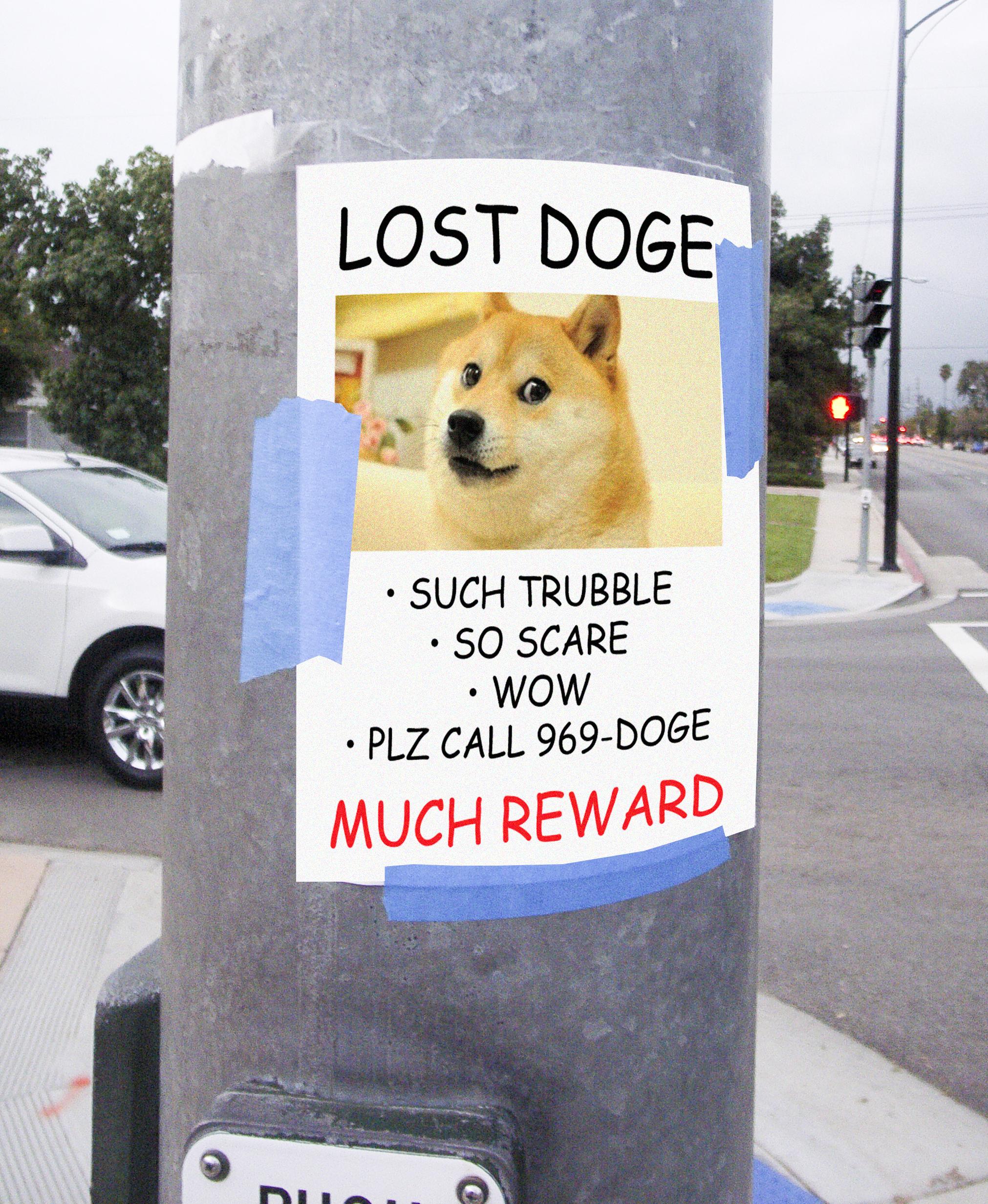 LOST DOGE SUCH TRUBBLE SO SCARE WOW PLZ CALL 969 MUCH REWARD