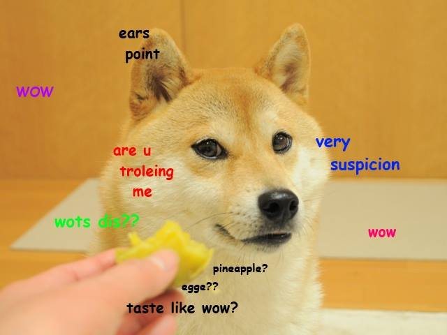 Ears Point Wow Very Are U Troleing Suspicion Me Wots Dis Pineapple
