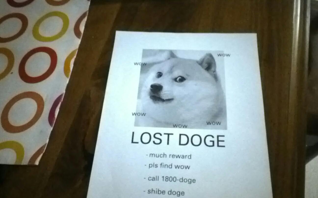 Wow LOST DOGE Much Reward Pls Find Call 1800 Doge