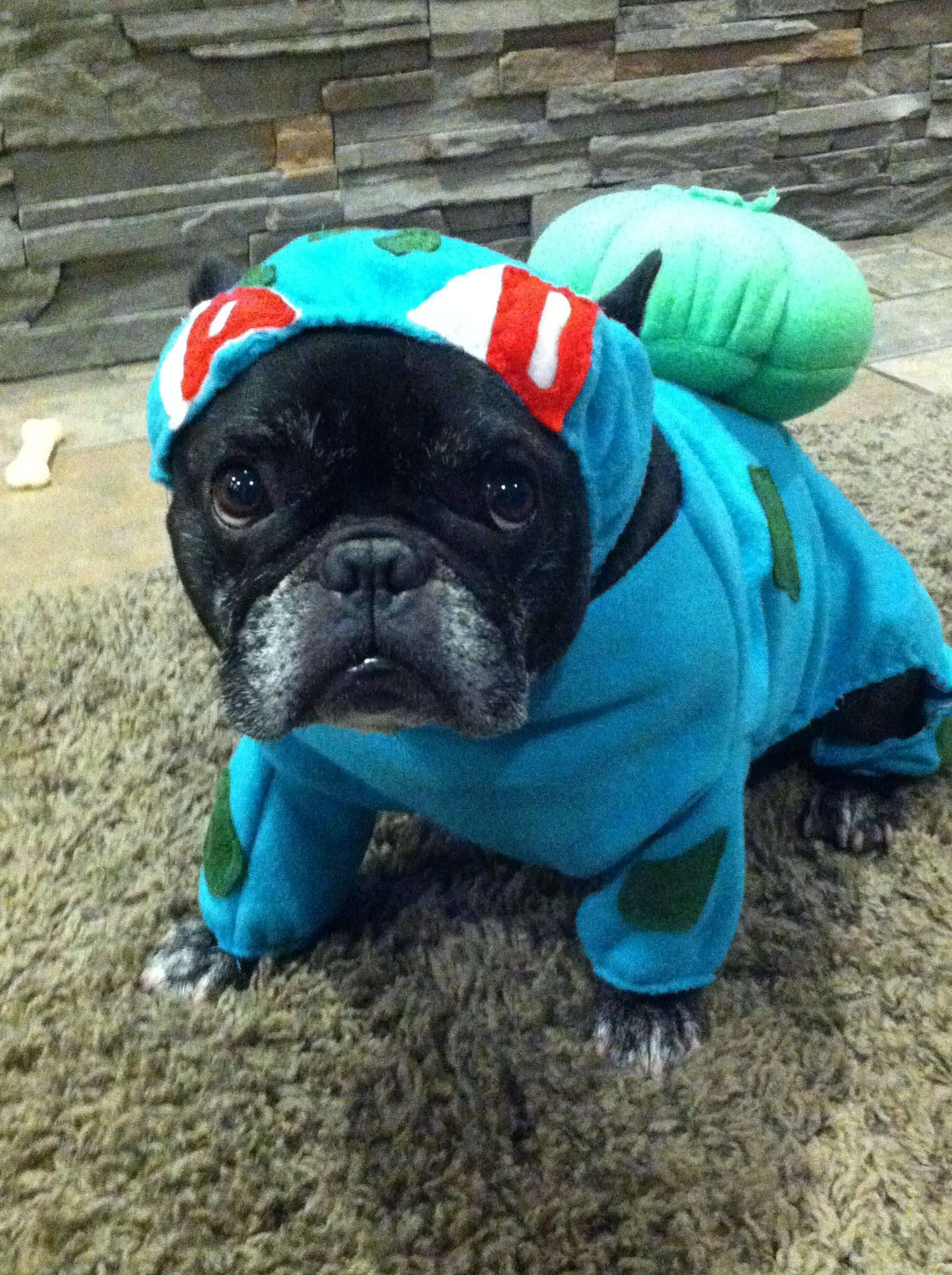 French Bulldog Bulldog Pug Costume Cat Puppy dog dog like mammal dog breed pug snout & Image - 634033] | Halloween | Know Your Meme