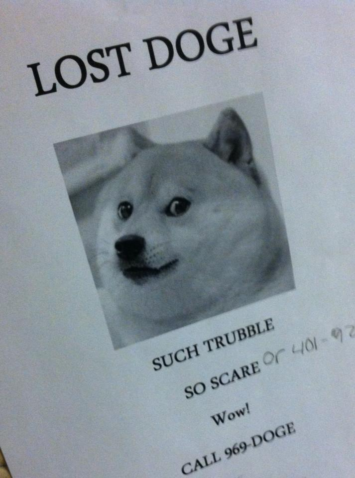 LOST DOGE SUCH TRUBBLE SO SCAREr 40 2 Wow CALL 969