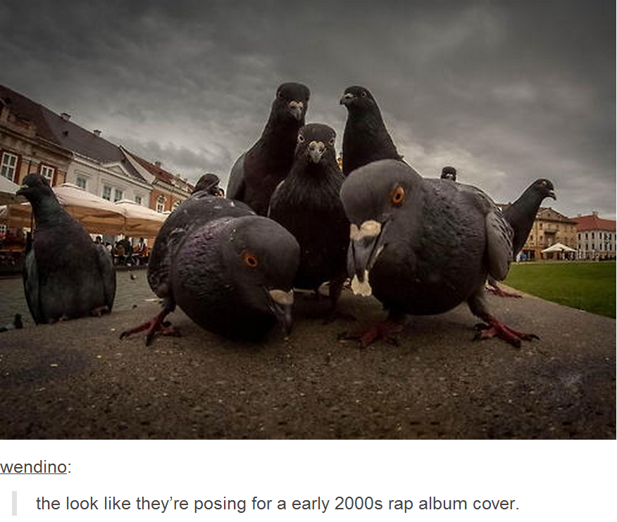 the flock posing for an early 2000s rap album cover animals know