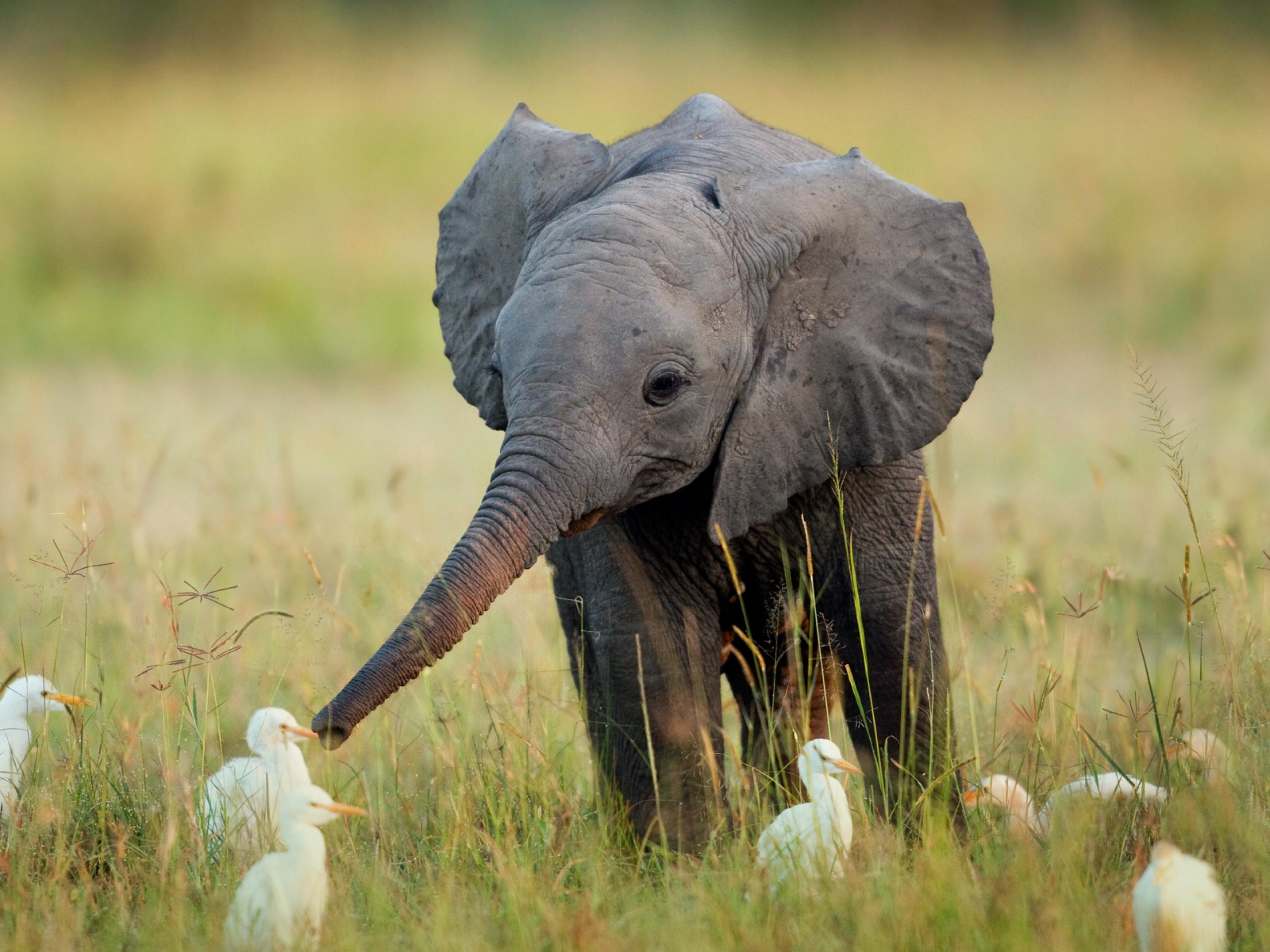 Image result for baby elephant