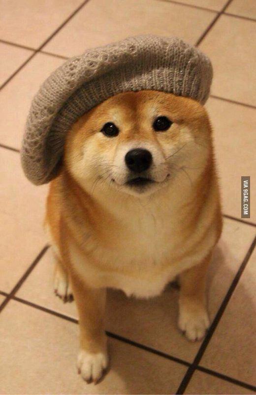 Fashion week Meme dog stylish for girls