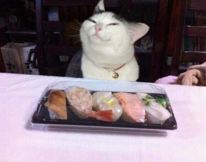 Sushi Cat Cats Know Your Meme