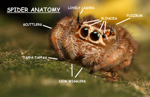Spider Anatomy | Spiders | Know Your Meme