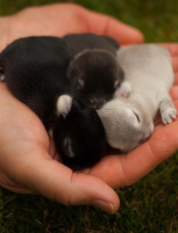 Bulldog Kitten Puppy Dog Like Mammal Breed Group