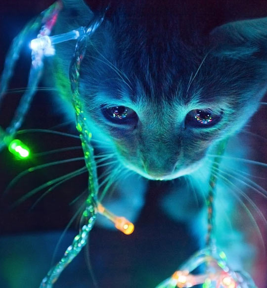 Christmas Lights | Cats | Know Your Meme