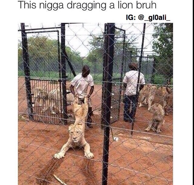 The Lion Doesnt Look Good Black Twitter Know Your Meme