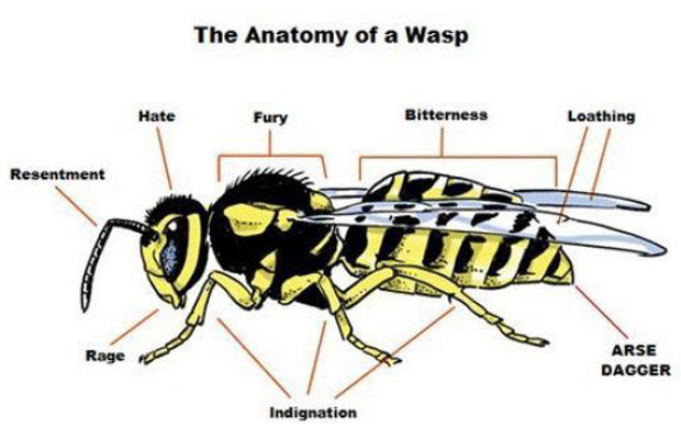 Anatomy Of A Wasp Proper Anatomy Know Your Meme