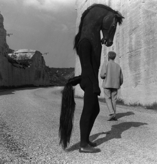 Costume photograph black and white horse monochrome photography horse like mammal standing photography mane