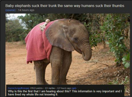 Baby Elephants Suck Their Trunk The Same Way Humans Suck Their Thumbs  (source) 14