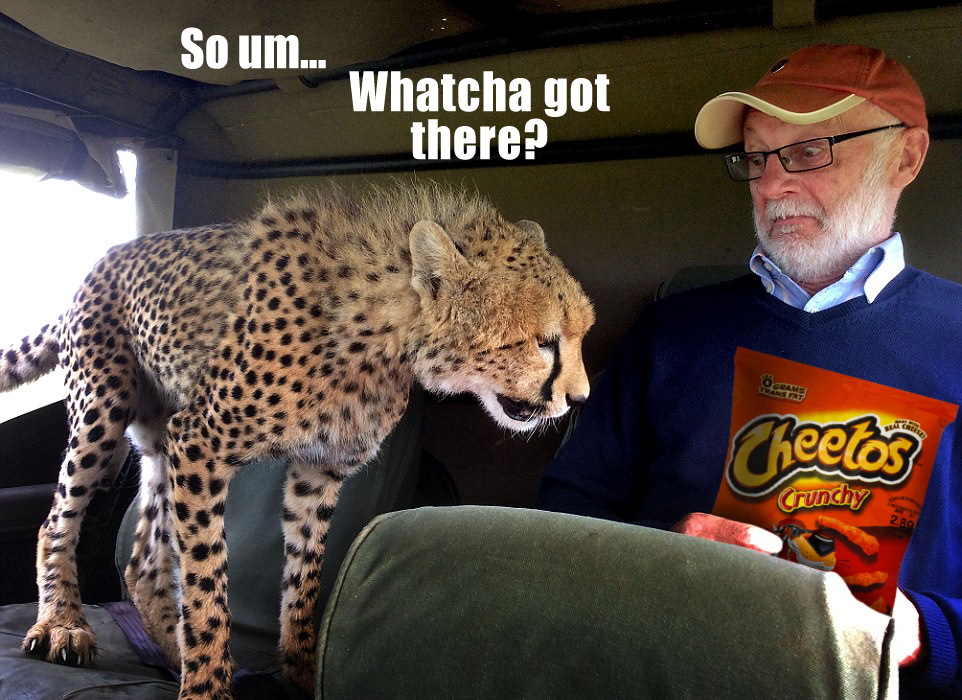 Cheetos Cheetah Cats Know Your Meme