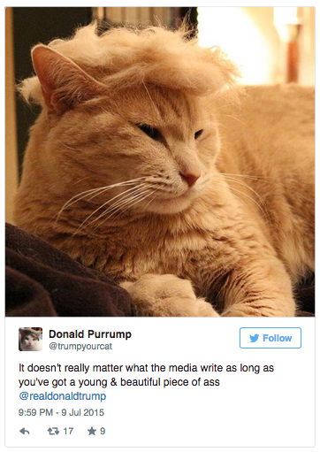 Trumpyourcats Post Trump Your Cat Know Your Meme