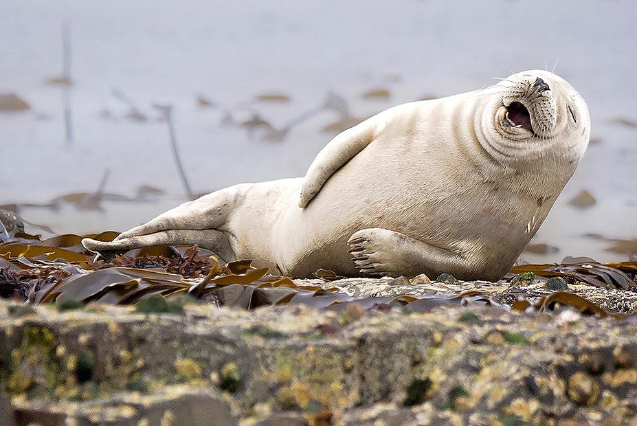 Картинки про тюленей смешные, цветами