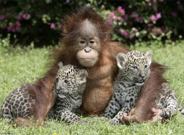 Image result for animals hugging